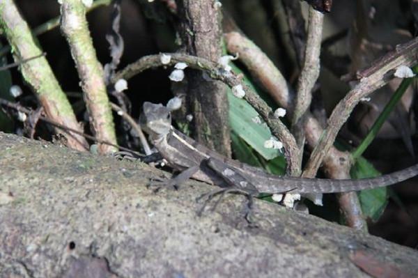 Costa Rica -2009