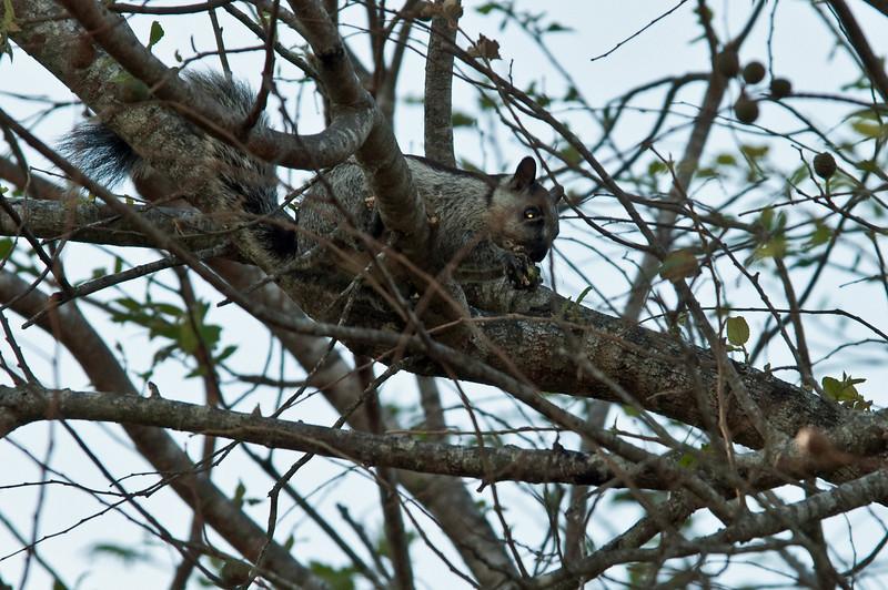 Squirrel<br /> <br /> 156-DSC_2196