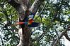 Scarlet Macow<br /> <br /> 203-DSC_2523
