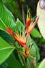 Bird of Paradise (not what we usually see)<br /> <br /> 011-DSC_1080