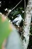 White Hawk<br /> <br /> 013-DSC_1096