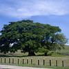 Guanacaste National Tree