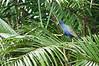 Purple Gallinule<br /> <br /> 069-DSC_1543