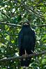 Black Hawk<br /> <br /> 218-DSC_2663