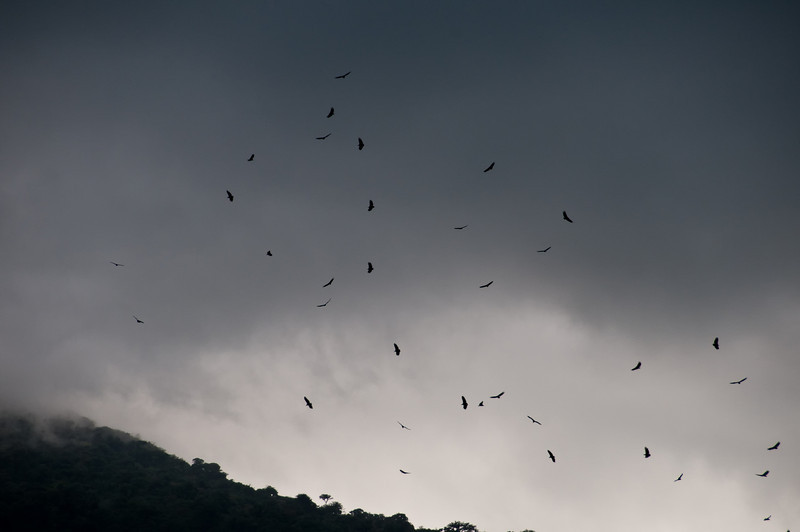 On our arrival in La Fortuna this is what I saw.  After our long trip I began to think that the vultures circling our hotel might be a bad omen.  Instead it turned out to be the first of many glorious birds, reptiles, insects and plants we would see. <br /> <br /> 001-DSC_1051
