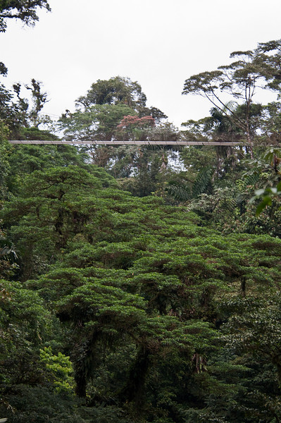 This is one of the many hanging bridges you will cross on the slightly over 3 kilometers of trail through the jungle.  I believe there were 15 bridges in all plus the connecting trails.<br /> <br /> 035-DSC_1222