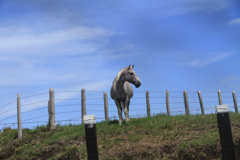 Driving by my horse