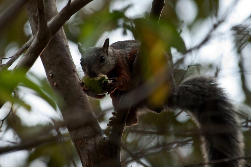 Squirrel<br /> <br /> 232-DSC_2797