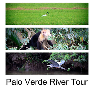 Palo Verde River Tour