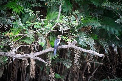 Unidentified Heron, Palo Verde River Tour