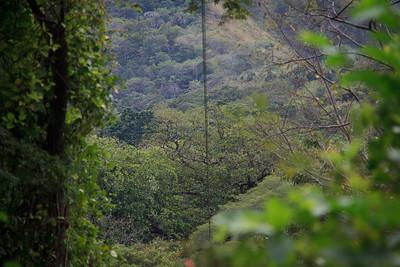 The Costa Rican Jungle