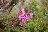 Common volcanic-area flowers