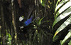 Hummingbird acrobatics