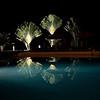 Costa Rica 2013: Uvita - 280 Traveller's Palms at night