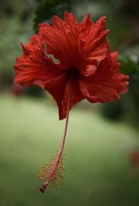 ? Flower