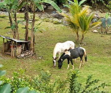 Dennis' Horses