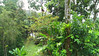 """A view from our front porch at Villa Decary.  Pavement below is the """"main drag"""".  We awoke to howler monkeys, which we saw as we strolled the grounds.  We also saw a bunch of toucans and other birds.  A very special place!"""