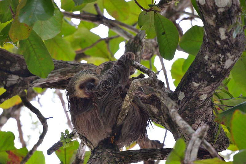 However, there was an adorable sloth in the tree that captured our interest.