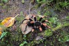 We were lucky to see a tarantula on the trail.