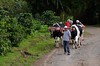 ...where they demonstrated the ox cart in action.
