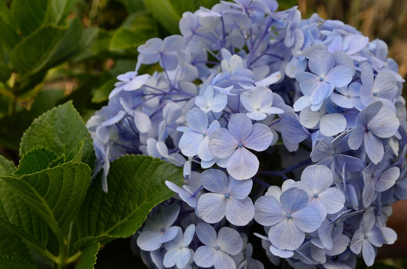 The flowers were spectacular- especially the hydrangeas.