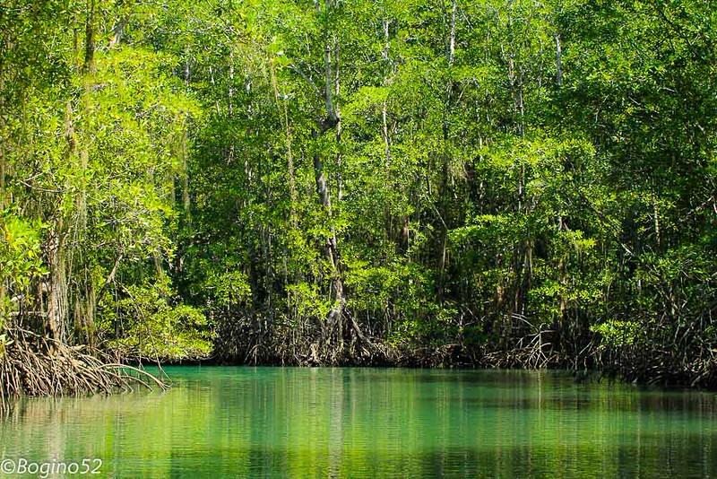 Entering mangroves, Golfe Dulce.