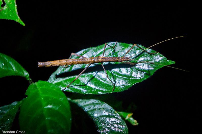 Stick bug!