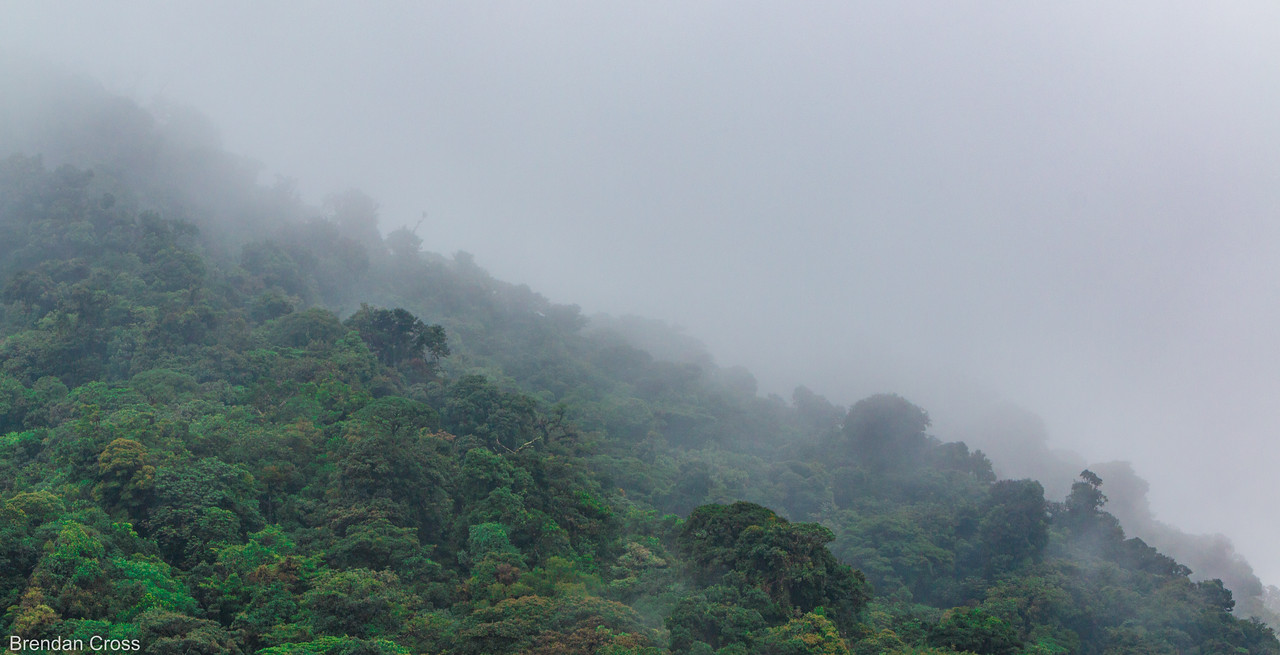 Cloud forest is a fitting name...