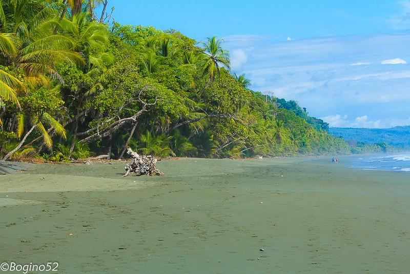 Playa Carate, Corcovado National Park on the Osa Peninsula.