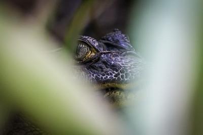 Costa Rica, nature, wildlife, outdoor photography, EOS 70d