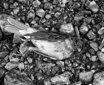 Bye-bye Birdie