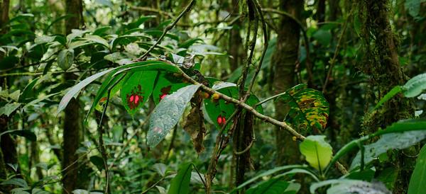 Quebradas, Costa Rica December 2020