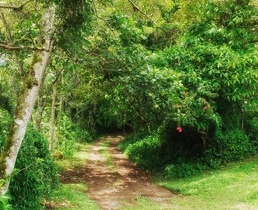 backroad along Río San Isidro