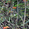 again, here in the center of this image, is another little, hiding bird .