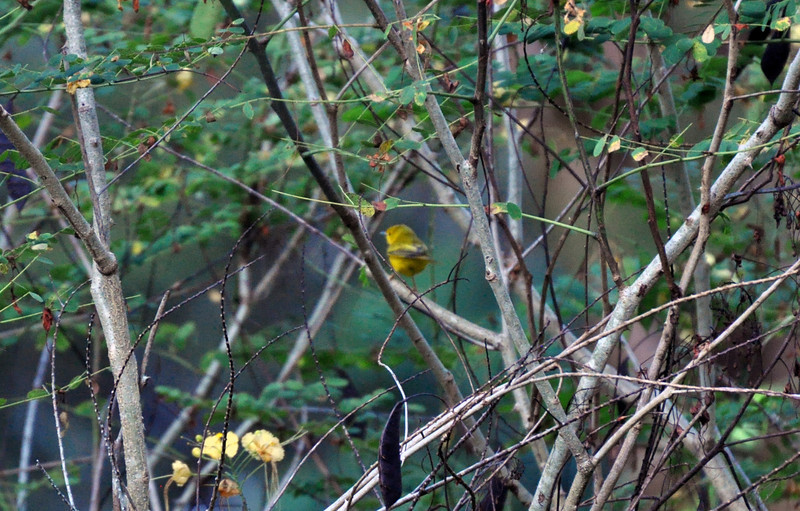 While a bit out of focus you can see the small bird in the center of this shrub.