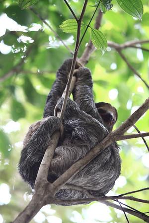 Costa Rica March 6-17, 2012