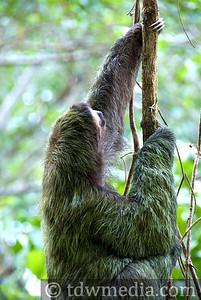 Costa Rica Tourism Board 9