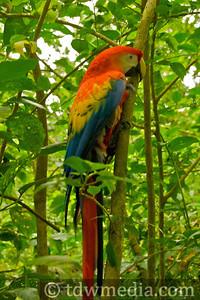 Costa Rica Tourism Board