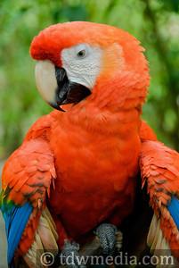 Costa Rica Tourism Board 22