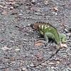 Manuel Antonio National Park, Costa Rica.  July, 2015