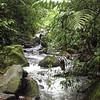 Rain forest, Sky Limit Experience, La Fortuna. July, 2015