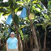 Susan at the banana plantation.  The blue plastic bags are put over the bunches of baby bananas to protect them from insects.