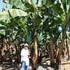 Pauline in the banana plantation.