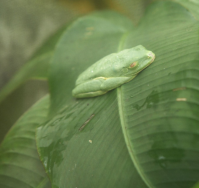 The butterfly conservatory also had a small collection of frogs.