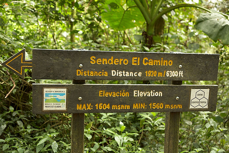 We took the Sendero El Camino trail for our walk through the Monteverde Cloud Forest Reserve. The day we visited, there were no clouds in the forest so visibility was unusually good.