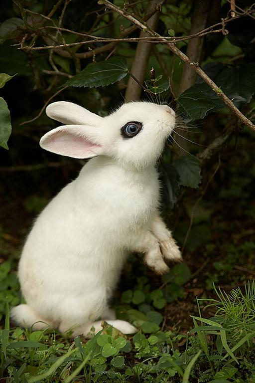 The hotel white rabbit.