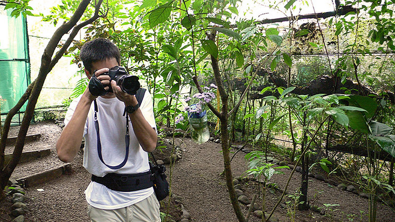Me trying in vain to grab a shot of the blue morpho butterfly in flight. It has beautiful blue wings but you can't see them when it's resting.