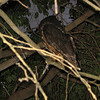 We discovered this little owl on our way to use the hotel's hot tub.