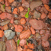 Leaf cutter ants at Orquideas.