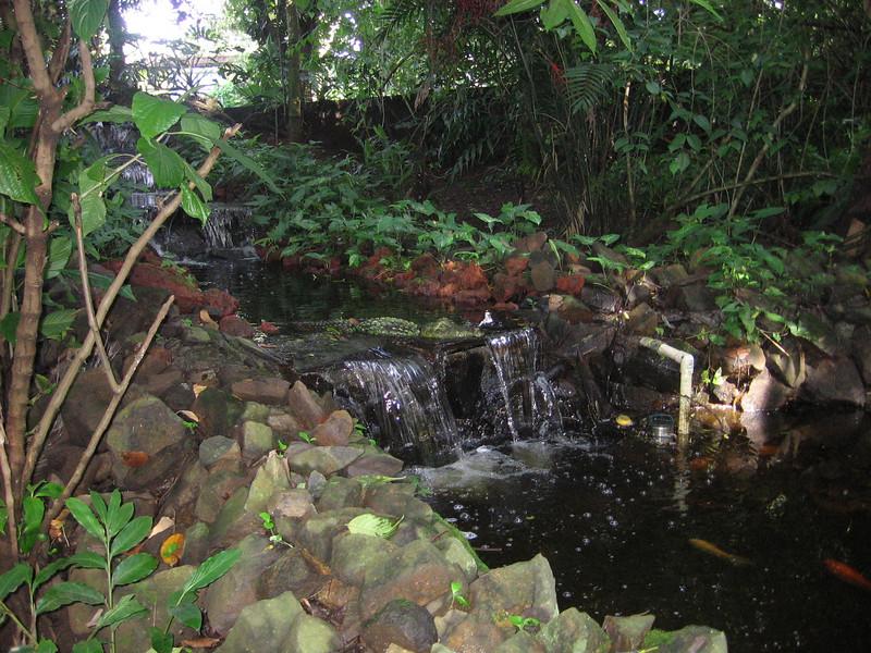 Koi pond on the grounds.